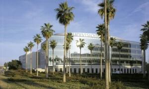 Univision-Palms.jpg
